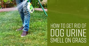 dog urine smell on gr