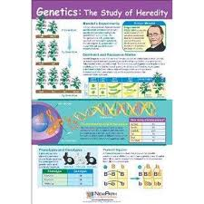 Genetics The Study Of Heredity Chart Southern Biological