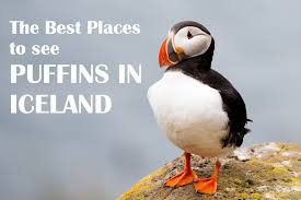 the best places to see puffins in iceland