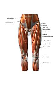 Amazon Com Female Anterior Leg Muscles Labeled Educational