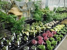 best garden plants. The Best Beginner Garden Plants N
