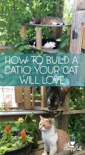 How to build a catio your cat will love