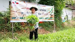 7 พืชใช้น้ำน้อย สู้ภัยแล้ง