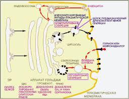 Развитие нервной системы у детей и подростков Как избавить от  развитие нервной системы у детей и подростков