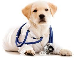 Mitos sobre la esterilización en perros - De perro a perro
