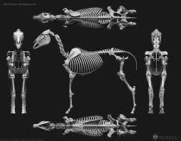 3d horse skeleton 3d model obj mtl stl ztl 3