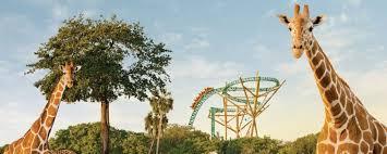 busch garden deals. Fine Busch Busch Gardens Tampa At BestofOrlandocom U2013 Cheetah Hunt Serengeti For Garden Deals