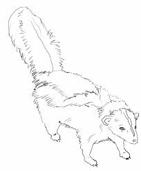 Small Picture Skunk Coloring Pages Coloring234