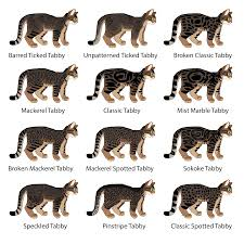 Tabby Patterns Unique Cat Genetics Guide Tabby Patterns Weasyl