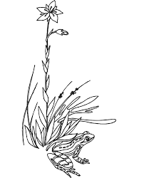 Small Picture Frog Coloring Page Frog in the Grass