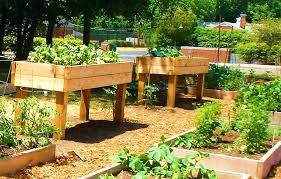 elevated raised garden beds. Elevated Raised Garden Beds The Bed Plans For Minimalist Gardening Cool Cedar