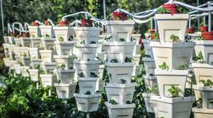hydroponic tower garden