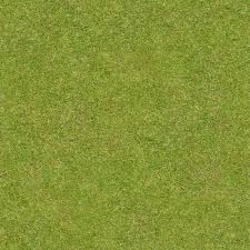 grass blade texture. Short, Flattened Green Grass With Thick Blades. Texture Is Consistent Throughout. Blade E