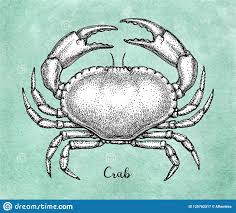 <b>Ink</b> Sketch Of <b>Brown Edible</b> Crab. Stock Vector - Illustration of object ...