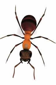 Little Black Ants In Kitchen Top 10 Unwelcome House Pests And How To Evict Them Independentie