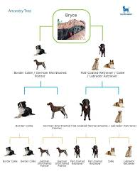 Dnaffirm Dog Breed Dna Test Easy And Painless Dog Dna