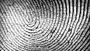 What Fingerprints Can Reveal About Ancestry Smart News