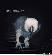 Don't Move Memes. Best Collection of Funny Don't Move Pictures via Relatably.com