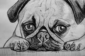 Ritratto Su Commissione Animali Cane Gatto Da Foto Matita Idea Rega