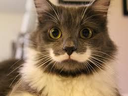 cat.  Cat To Cat