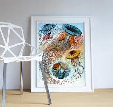 ernst haeckel discomedusae print jellyfish art vintage nautical