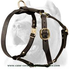 Image result for harness for dogs