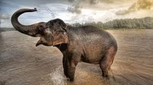 Elephant Hd 1080pelephant Hd 1080p 1920 ...