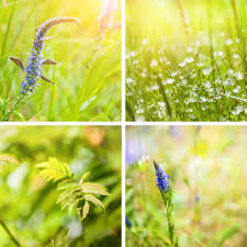 spring nature backgrounds. Download Collage Of Spring Nature Backgrounds Stock Photo - Image Many, Colorful: 50970158 E