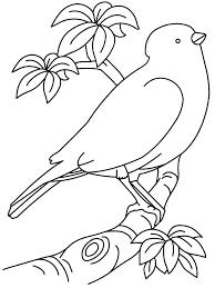 Bird Coloring Pages Free Trustbanksurinamecom