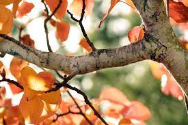 Tree branch wallpaper, Tree hd wallpaper