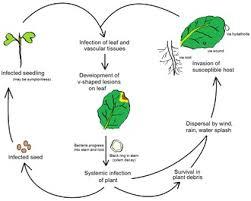 Plant Nutrient Interaction Chart Plant Pathology Wikipedia