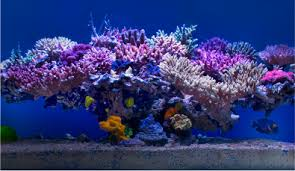 Image result for cost of professional aquariums