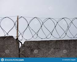 Barbed Wire Embroidery Design Concrete Wall With Coils Of Barbed Wire Stock Image Image