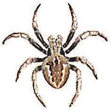 Spider Identification Australian Reptile Park