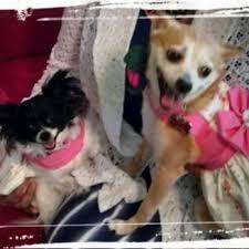 photo of fur pet salon and day spa winston m nc united
