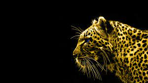 HD Wallpapers Black and Gold High ...