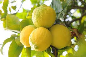 limoni sicilia online dating