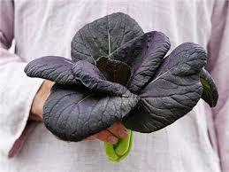 Purple Lady Bok Choy Baker Creek Heirloom Seeds
