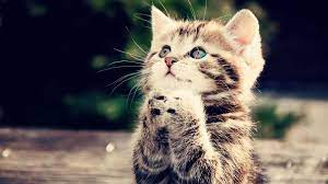 Happy kittens.Live wallpaper for ...