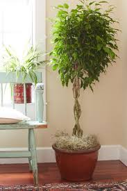 tall office plants. best 25 indoor plant decor ideas on pinterest plants and house tall office
