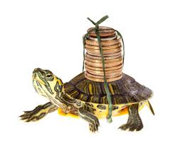 Just How Is The Amazing Painted Turtle As A Pet Turtleholic