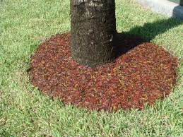 rubber mulch review. Unique Mulch Image Of Rubber Mulch Tree Ring Around Stump  On Rubber Mulch Review N