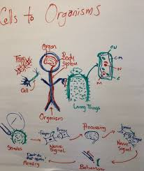 What Do Scientists Do Anchor Chart Ms Ls1 1 Anchor Charts The Wonder Of Science