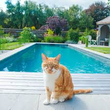 How long is a lap pool Inground Chemical Free Pool Ft Cat Greater Wichita Ymca The Real Cost Of Building Swimming Pool In The Uk