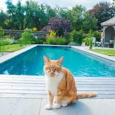 chemical free pool ft cat