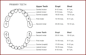 Children S Tooth Chart Letters Baby Teeth Chart Inspirational Teeth Numbers Chart Us Dental