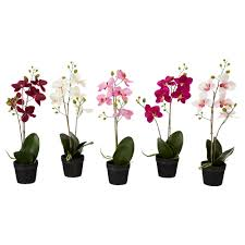 plants for office cubicle. $5 :: FEJKA Artificial Potted Plant - IKEA; 17\ Plants For Office Cubicle L