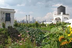 brooklyn grange rooftop farm 2 at