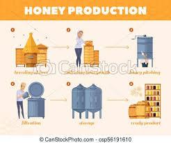 Honey Processing Flow Chart Honey Production Process Cartoon Flowchart