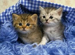 best 39 cute kitten backgrounds for puter on hipwallpaper